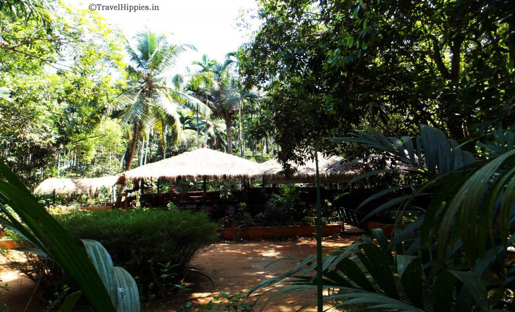 offbeat Goa. Spice Plantation Tour